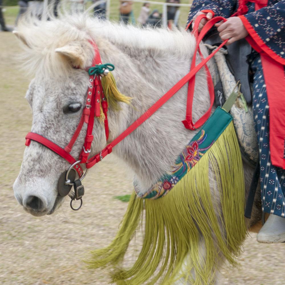 琉球競馬ンマハラシー イメージ4